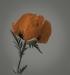 poppy-edj-0ct-2012