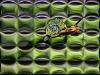 snail-on-speed