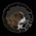 16-lee-todd-dog-mirror