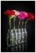 bottles-of-carnation