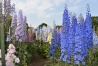 delightful-delphiniums