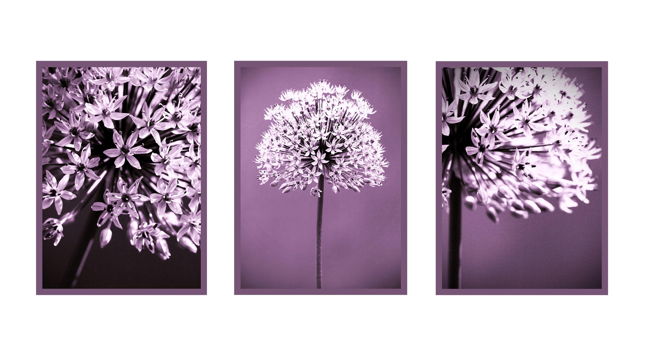 allium-triptych