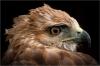yvonne-warriner-hawk-eye