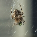 welcome-to-my-parlour-said-the-spider-to-the-fly