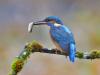 1st Kingfisher