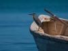 Blue Waters - Bill Mahoney