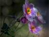 anemones-through-the-window-9da86fb19b797d84db4013da50684664a98af9d7
