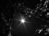 ash-tree-backlit-by-supermoon-d7e0a24ea5d53c9dbfd22fa5da03ead5da9813bd