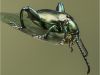 Applied- Highy Commended Green Frog Legged Beetle  (Sagra buqueti) By Paul Wagstaff