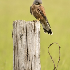Open-Commended-Perched-By-Sara-Cremer