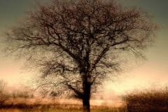 1st Print - Oakwood Tree -Sally-Sallett