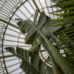Glasshouse Roof At Kew - Sally Sallett