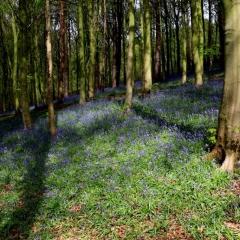 Woodland Springtime - John Mynard