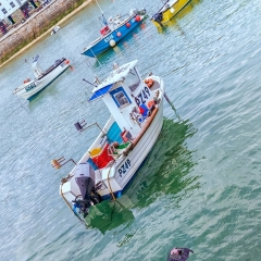 A Seal Amongst the Fishing Boats - Angela Crutchley-Rhodes
