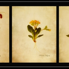 21-Botanical-Study-From-My-Garden