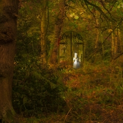 Commended - Alice Finds the Door to Nowhere - Harry Wentworth