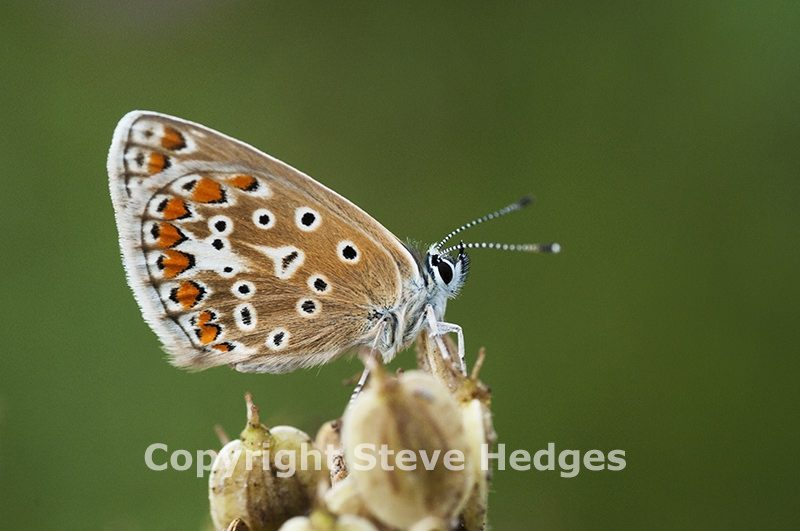 Butterfly_3_LANGDON-HILLS