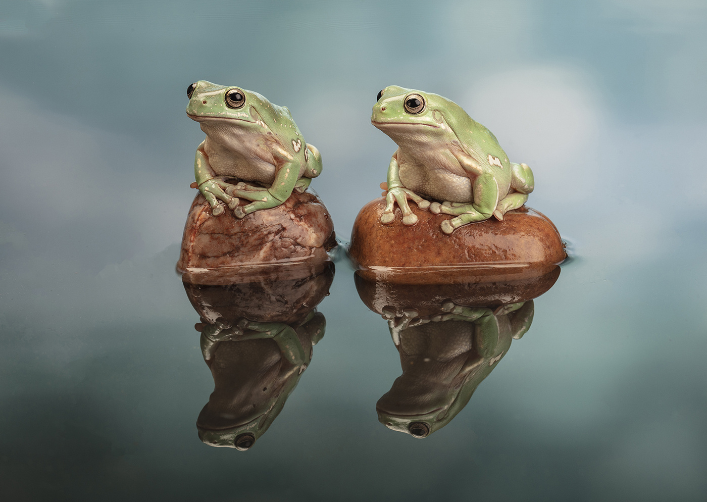 2nd-Place_White-Tree-Frogs_by_Jeffrey-Cummins