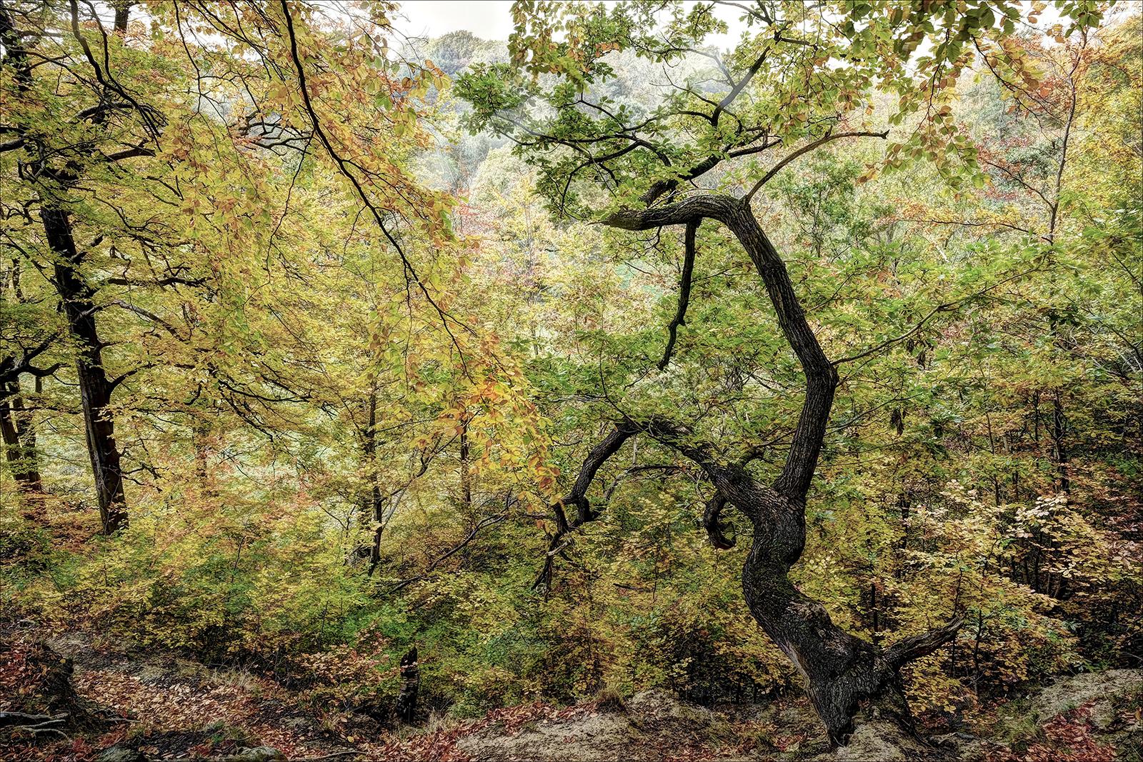 Keeper-Of-The-Wood_by_Neil-Clarke