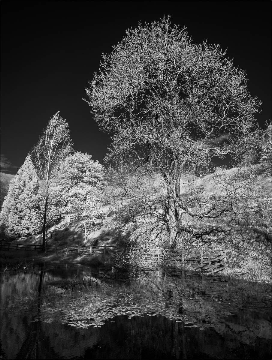 Lakeside_by_Nigel-Hazell