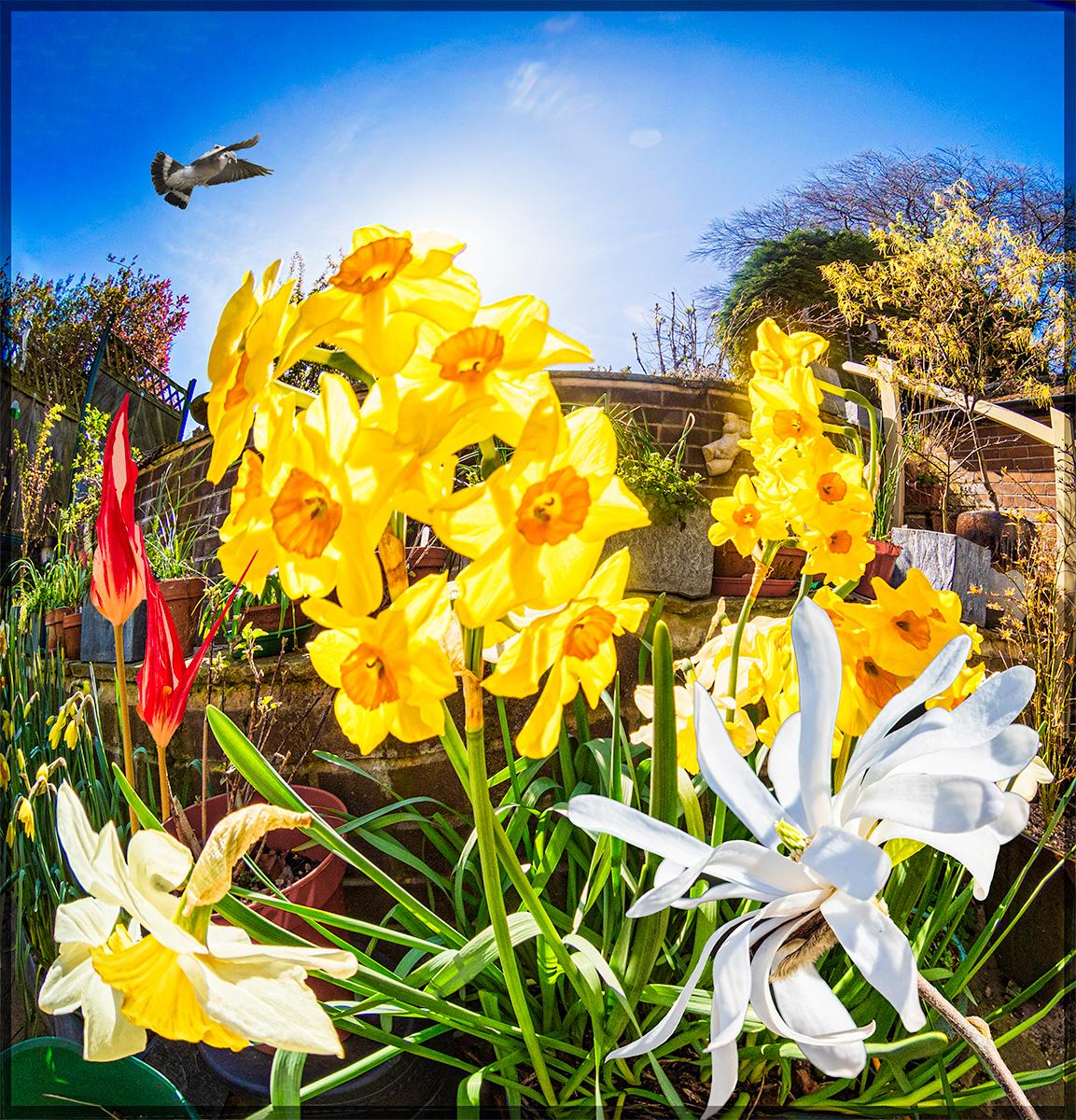 Spring_by_David-Kershaw