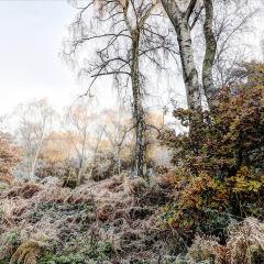 Winter-In-Sherwood_by_Neil-Clarke