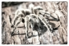 tarantula mono crt