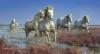 Carmargue horses