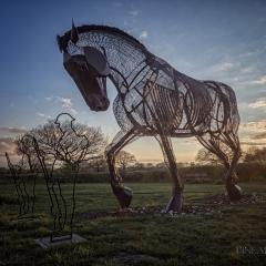 Warhorse