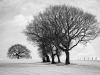 Steve Womack CPAGB - Winter Treescape