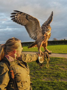 Kiera and the Eagle Owl